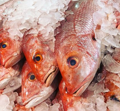Ruby fish